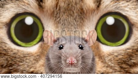 Portrait Of A Rat On The Background Of Cat's Eyes