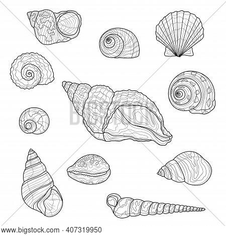 Seashells Set.coloring Book Antistress For Children And Adults. Illustration Isolated On White Backg