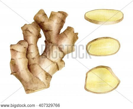 Watercolor Ginger Root With Slices. Hand Drawn Ginger Rhizome Cross Section Illustration Isolated On