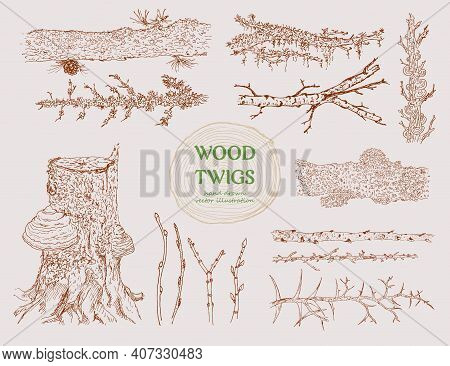 Hand Drawn Wood Branches Set With Different Tree Twigs Trunks Stumps Cones And Mushrooms Isolated Ve