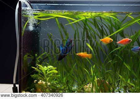 Aeration Of Water In Aquarium With Different Colored Fishes And Plants