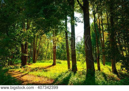 Spring forest landscape in sunny spring evening, spring forest trees lit by soft sunlight. Spring forest nature in sunset light, spring forest, sunny spring nature, spring landscape