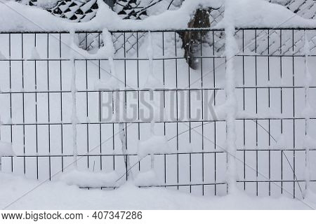 Wired fence covered with fresh snow