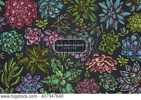 Floral Design On Dark Background With Succulent Echeveria, Succulent Echeveria, Succulent Stock Illu