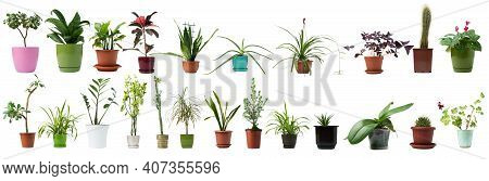 Set Of Indoor Plants In A Pot Isolated On A White Background. Collection Of Different House Plants.