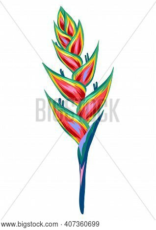 Illustration Of Tropical Heliconia Flower. Decorative Exotic Plant.
