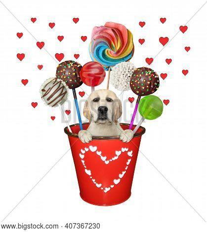 A Dog Labrador Is Inside A Red Metal Pail With Sweets. White Background. Isolated.