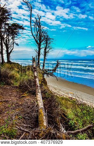 Trunks Of Fallen Trees At Low Tide On The Pacific Ocean In Olympic, National Park, Washington