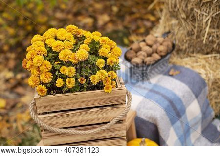 Autumn Photozone. Fall Decorations. Plaid, Hay, Flowers, Leaves And Walnuts. In The Forest. Banner O