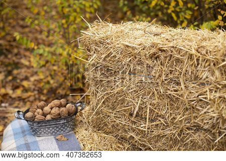 Autumn Photozone. Fall Decorations. Plaid And Hay, Leaves, Walnuts. In The Forest. Banner Or Greetin