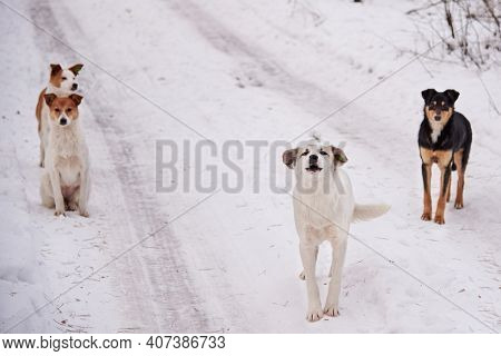 A Flock Of Homeless Dogs On The Road In The Forest In Winter, The Problem Of Homeless Animals.