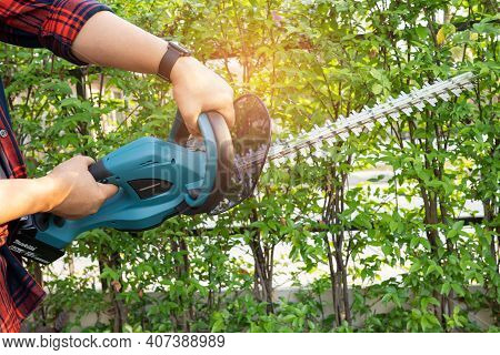 Gardener Holding Electric Hedge Trimmer To Cut The Treetop In Garden.