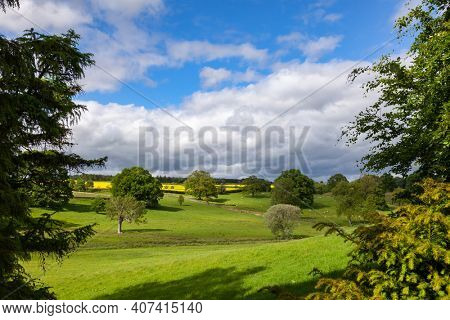 Summer rural landscape with sheep grazing on green field in Southern England, UK