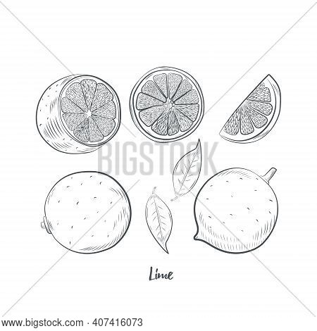 Lime Fruit Sketch Vector Illustration. Hand Drawn Lime Sketch Isolated On White Background.