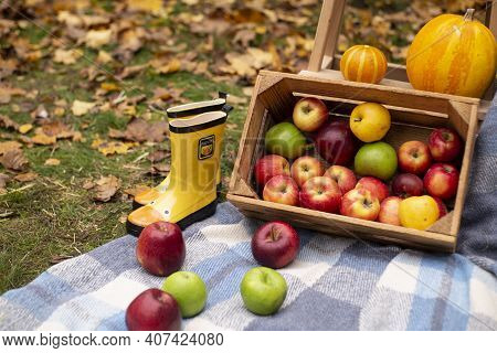 Autumn Photozone. Fall Decorations. Plaid, Pumpkins, Apples, Hay And Leaves. In The Forest. Banner O