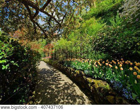 Springtime Garden Walkway