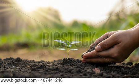 Tree Planting And Tree Planting, Including Planting Trees By Farmers By Hand, Plant Growth Ideas.
