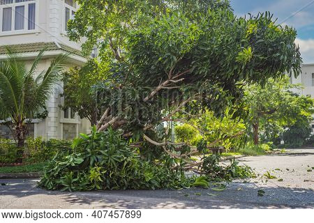 Trees Damaged And Uprooted After A Violent Storm. Trees Have Fallen In A Residential Village