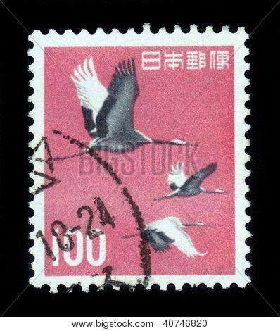 Japanese (manchurian) Cranes