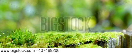 Green Moss Stump Background Product Montage Or Display Template. Blurred Forest Abstract Moss Stump