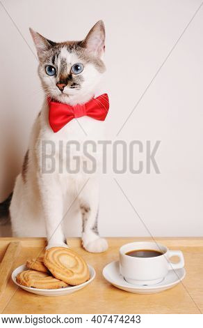 Cute White Blue-eyed Cat In Red Bow Tie Is At The Table Served With Cup Of Coffee And Cookies.