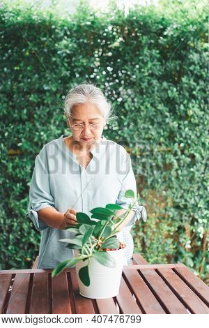 A Happy And Smiling Asian Old Elderly Woman Is Planting For A Hobby After Retirement In A Home. Conc