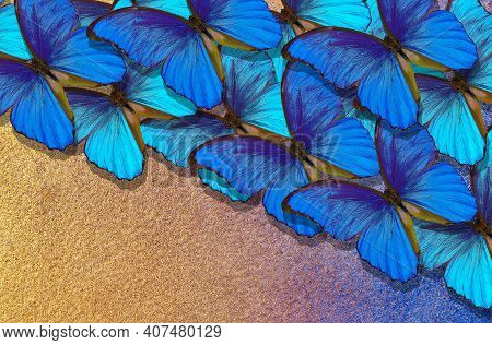 Gold And Blue Background. Pattern Of Blue Morpho Butterflies On Gold Background