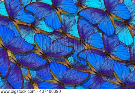 Blue Abstract Texture Background. Butterfly Morpho. Wings Of A Butterfly Morpho. Flight Of Bright Bl