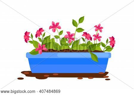 Home Plant Flowerpot Cartoon Vector Illustration Isolated On White, Pink Agrostemma, Green Leaves, S