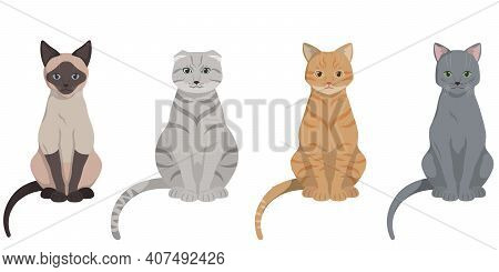 Set Of Sitting Different Cats. Siamese, Lop-eared, Red-headed And Russian Blue Cat.