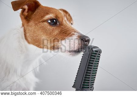 Jack Russell Terrier Dog Speaks With Microphone On White Background