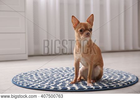 Cute Chihuahua Dog Sitting On Warm Floor Indoors, Space For Text. Heating System