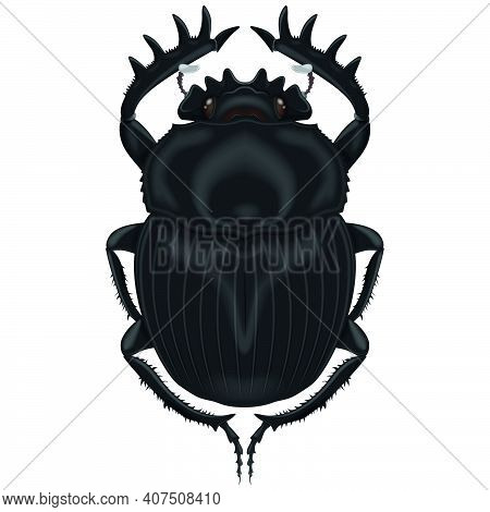 Vector Design Of An Insect, Dung Beetle, All On White Background