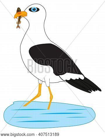 Bird Sea Gull On Fish Sea In Beak