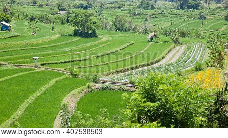 Terrace Rice Fields, Bali, Indonesia. Rice Cultivation, Asian Landscape With Green Fields. Rice Terr
