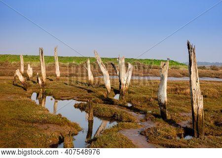Old Wooden Posts In Marshland, Thornham Salt Marshes, North Norfolk Coast, England, Uk