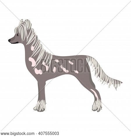 Chinese-crested Dog On White Background. Illustration. Vector.