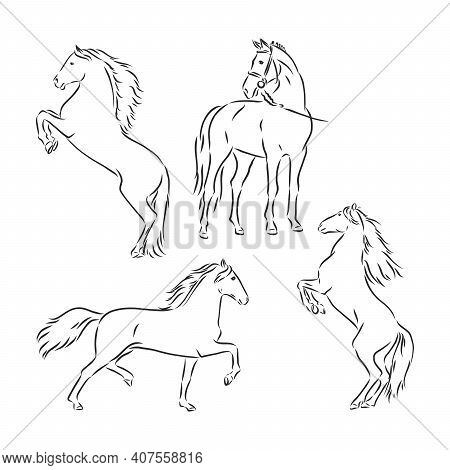 Black And White Sketch Of Horse. Horse, Vector Sketch Illustration