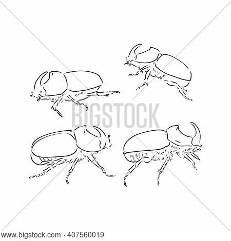 Beetle Rhinoceros Drawing In Style Engraving Sketch Vector.rhinoceros Beetle Vector Sketch Illustrat