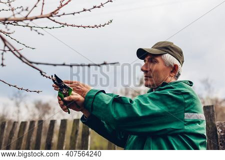 Man Worker Pruning Tree With Clippers. Male Farmer Wearing Uniform Cuts Branches In Spring Garden Wi