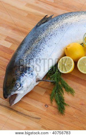 Atlantic Salmon fish close up