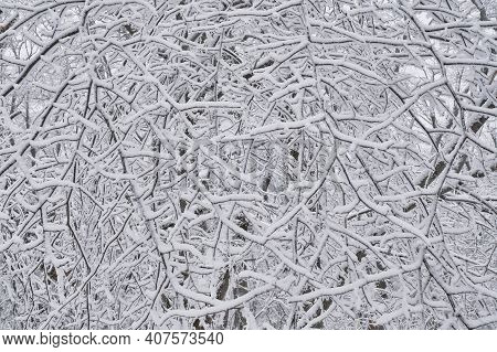 Texture Of Chaotic Thin Branches Covered With Snow As Abstract Winter Background