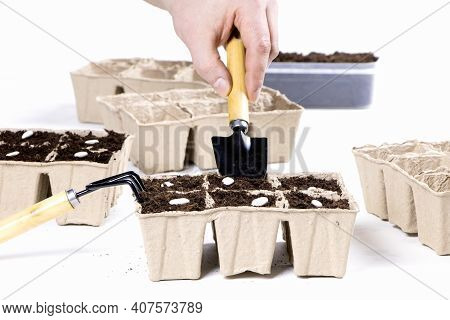 Seeds Of White Beans In Biodegradable Pots Isolated On A White Background.gardening.soil For Seedlin