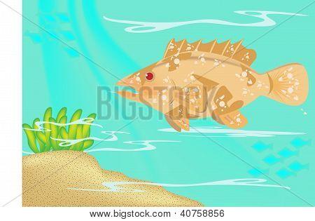 Greasy grouper