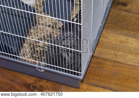 A Metal Cage With Chinchilla Placed On The Wooden Floor