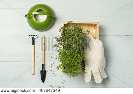 Micro-greens Contain More Vitamins Than The Vegetables Themselves. Micro-greenery Is Now Becoming Ve