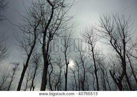 The beautiful deciduous tree