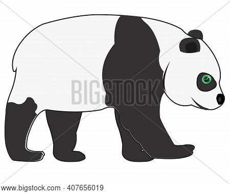 Panda Bear On White Background Is Insulated
