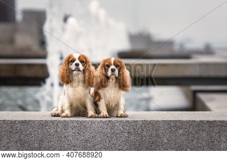 Two Young Cavalier King Charles Spaniel Dogs Sitting Near Water Fountain At City Street Outdoors
