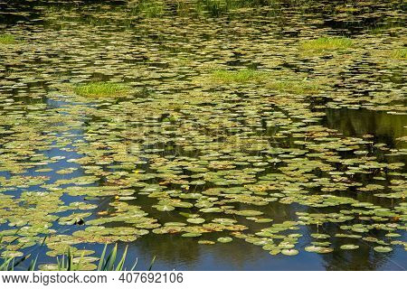 Beautiful Summer Countryside Landscape With River And Water Lily Leaves